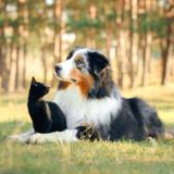 Arthrose : un nouveau traitement révolutionnaire pourrait (enfin) soulager durablement son animal