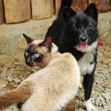3% des Suisses mangeraient du chat et du chien : une pétition pour interdire cette pratique