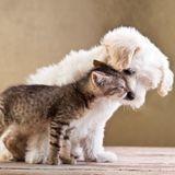 Assises de la PPA 2020 : le 25 avril, venez débattre sur le sujet de la condition animale !
