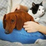 Purina® offre une bourse à ceux qui étudient la relation homme-animal