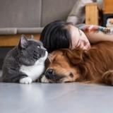 Quel budget prévoir avant d'accueillir un chat ou un chien ?