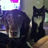 Après 13 années de vie commune, ce chat et ce chien ont pris une grande décision