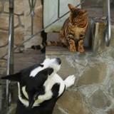 Elle entend des bruits, pense que c'est son chien et son chat mais se met à crier en découvrant la vérité
