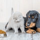 Enquête sur l'alimentation de nos animaux : que cachent les aliments pour chiens et chats ?