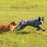 Les aoûtats chez le chien et le chat : comment protéger et traiter son animal ?