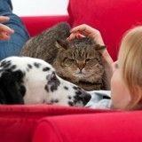Ce soir, ne manquez pas Comme chien et chat sur France 4, un documentaire inédit !