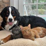 Chien, chat, lapin... ce que votre animal dit de vous