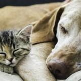 Ce chien se prend pour un chat, et c'est très mignon (Vidéo du jour)