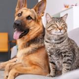 Les antiparasitaires pour chiens peuvent tuer votre chat