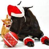 Un animal pour Noël : oui ou non ?