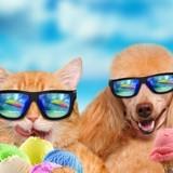 Vacances d'été 2018 : destinations, transports, formalités… Tous nos conseils pour bien voyager avec votre chien/chat