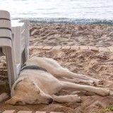Alerte canicule: mon chien a trop chaud, que faire?