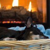 7 accessoires pour le bien-être de votre chien pendant l'hiver