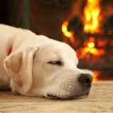 5 façons de protéger votre chien de la cheminée cet hiver