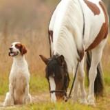Pris au piège dans une rivière, ce chien a été sauvé de la noyade par un cheval !