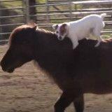 Ce chien qui a vécu l'enfer se lie d'amitié avec un cheval (Vidéo)