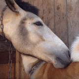 Le chien et le cheval qui s'aiment d'amour tendre (Vidéo du jour)