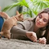Mon chien chevauche les humains : pourquoi et que faire ?