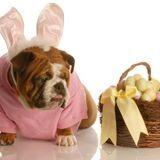 Chiens vs chocolat : Attention aux oeufs de Pâques !