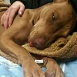 Le vétérinaire ne comprend pas ce qui va mal avec ce chien, un enfant fait une confession terrible