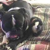 Ce chien refuse d'accepter la mort de son copain Cochon d'Inde, ce qu'il fait a brisé le coeur de ses maîtres