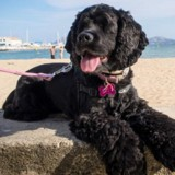 Ce chien voit ses maîtres pour la 1ère fois, 2 mois plus tard le vétérinaire annonce une nouvelle bouleversante