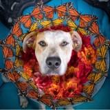 Cette photographe décore des collerettes pour chiens pour une séance photo, et le résultat est bluffant