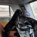 En un an, ces agents de la SNCF ont accompagné plus de 1000 animaux de refuge dans leurs nouvelles familles !