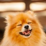 Journée Mondiale du Bonheur : 10 chiens et chats qui vont vous donner le sourire (Photos)