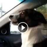 Ce chien TROP content d'arriver au parc va vous mettre de bonne humeur ! (Vidéo du jour)