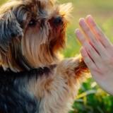 5 raisons pour lesquelles confier votre chien est l'une de vos meilleures résolutions pour 2018