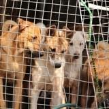 Corée du Sud : Pendant les JO, les restaurants continuent de servir du chien