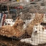 Jeux Olympiques : une championne de patinage artistique sauve des chiens destinés à être mangés