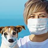Coronavirus : les demandes d'euthanasie de chiens et de chats se multiplient, les vétérinaires sont furieux