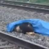 Un homme se fait écraser par un train, la réaction de son chien bouleverse le monde entier (Vidéo)