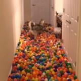 Il achète 5400 balles pour son chien, sa réaction est un pur bonheur (Vidéo du jour)