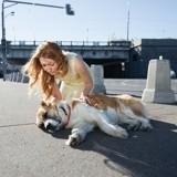 Alerte canicule : comment éviter le coup de chaleur chez le chien ou le chat ?