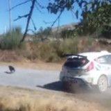 Pour sauver un chien, ce coureur automobile a tout perdu (Vidéo)