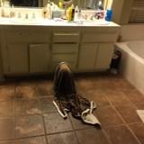 Au beau milieu de la nuit il entend un bruit, se lève et n'en revient pas de ce que fait son chien !