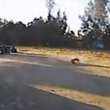 Un coyote va dévorer un chien, quand une seconde plus tard l'impensable se produit (Vidéo)