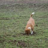 Son chien gratte le sol en aboyant : quand il voit ce qui se trouve sous la terre, les larmes coulent
