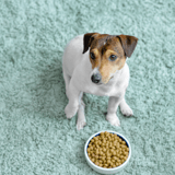 Quelles sont les meilleures croquettes pour problème urinaire pour chien en 2021 ?