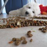 Elle mange uniquement de la nourriture pour chien pendant 6 jours. Mais pourquoi ?