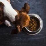 Qu'est-ce que l'hydrolysat d'agneau et en quoi est-ce bon pour mon chien ?