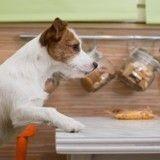 10 aliments toxiques pour les chiens