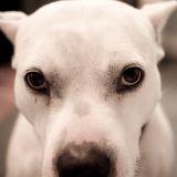 Narbonne : il utilisait son chien comme une arme