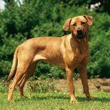 Loi sur les « chiens dangereux » : voie sans issue ?