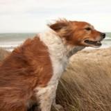 Il fait un temps de chien : le warning météo insolite !