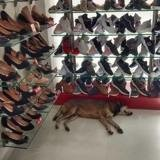 Une dame est choquée de voir un chien errant dans un magasin : la réponse de la propriétaire devient virale