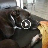 Ce chien fan de jazz danse (presque) en dormant (Vidéo du jour)